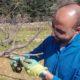 Hima Farm Heroes: Louis Saad